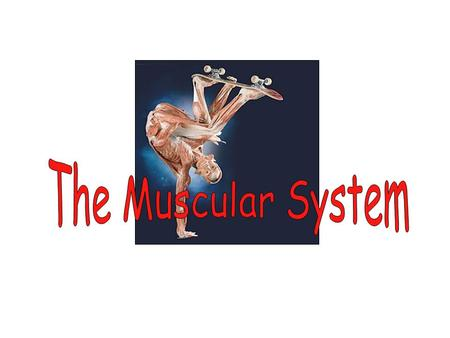 I.Types of muscle A.SKELETAL muscles attach to the skeleton. They function in movement and maintenance of posture. 1.They can be long (up to 30 cm). 2.They.