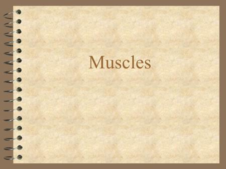 Muscles. Types of Muscle 4 Smooth - involuntary 4 Skeletal - voluntary 4 Cardiac - involuntary.