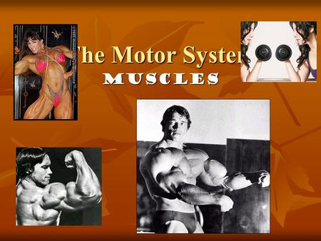 The Motor System Muscles. Muscles Howstuffworks Cardiac and Smooth Muscle Howstuffworks Cardiac and Smooth Muscle Howstuffworks Cardiac and Smooth.