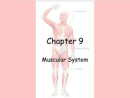 Chapter 9 Muscular System.