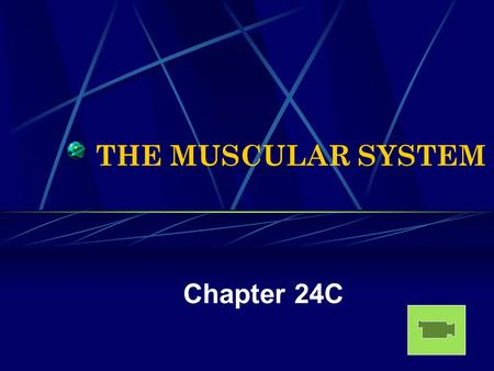 THE MUSCULAR SYSTEM Chapter 24C. Muscular System Stats There are approximately 600 muscles. Of all the many different kinds of cells in the human body,