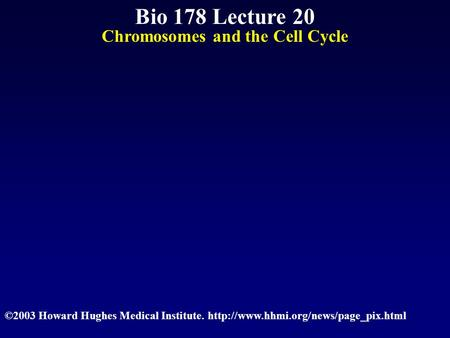 Bio 178 Lecture 20 Chromosomes and the Cell Cycle ©2003 Howard Hughes Medical Institute.