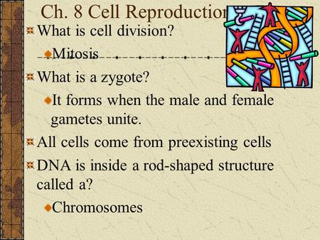 Ch. 8 Cell Reproduction What is cell division? Mitosis