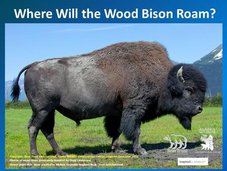 Where Will the Wood Bison Roam? Copyright: Bear Trust International, Alaska Wildlife Conservation Center, Inspired Classroom 2012 Photos of wood bison.