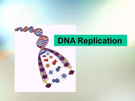 DNA Replication. What does DNA stand for? D = deoxyribo + N = nucleic + A = acid Put it all together and it spells- deoxyribonucleicacid.