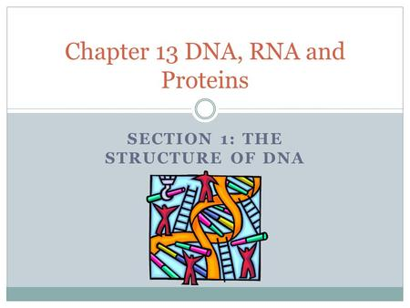 SECTION 1: THE STRUCTURE OF DNA Chapter 13 DNA, RNA and Proteins.