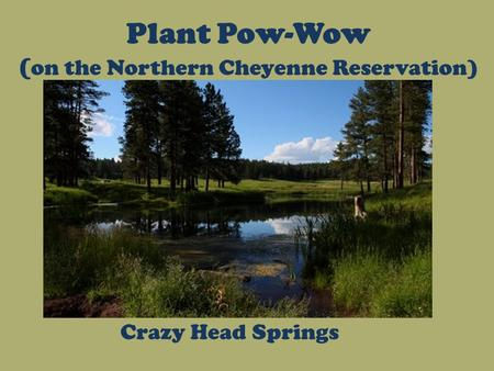Plant Pow-Wow ( on the Northern Cheyenne Reservation) Crazy Head Springs.