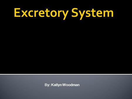 By: Katlyn Woodman. The excretory system consists of, kidneys, ureter, urinary bladder, urethra, abdominal aorta, and inferior vena cava. The excretory.