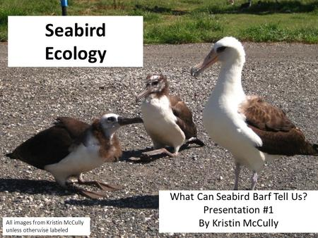 Seabird Ecology What Can Seabird Barf Tell Us? Presentation #1 By Kristin McCully All images from Kristin McCully unless otherwise labeled.