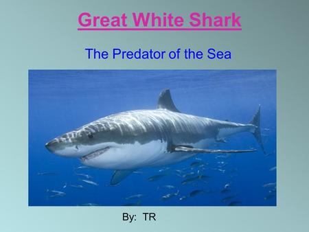 Great White Shark The Predator of the Sea By: TR.