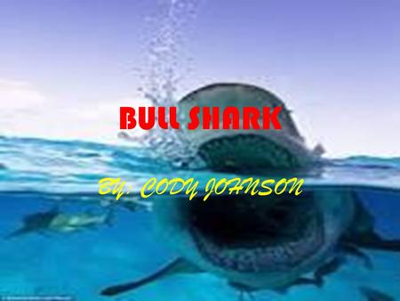 BULL SHARK BY: CODY JOHNSON. ADAPTATIONS Physical Traits A gland in the dorsal fin that holds salt for when it goes in a freshwater source. Sensitive.
