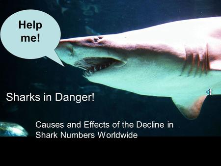 Sharks in Danger! Causes and Effects of the Decline in Shark Numbers Worldwide Help me!