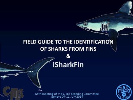 65th meeting of the CITES Standing Committee Geneva 07-11 July 2014 FIELD GUIDE TO THE IDENTIFICATION OF SHARKS FROM FINS & iSharkFin.
