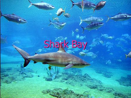 Shark Bay. ► Shark Bay is a world heritage site in the Gascoyne region of Western Australia. It is an area centered approximately on 25°30′S 113°30′E.