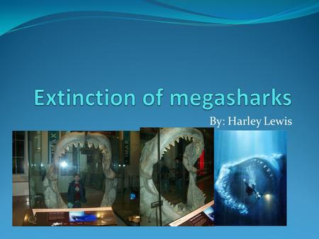 By: Harley Lewis. Main question? What happened to megasharks like Carcharodon megalodon?