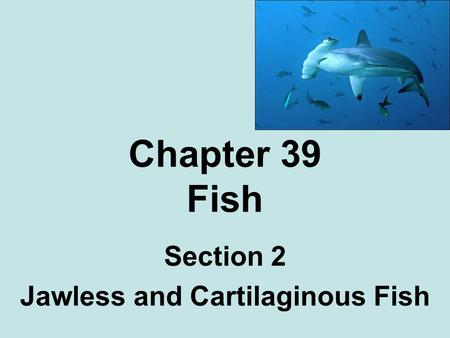 Section 2 Jawless and Cartilaginous Fish