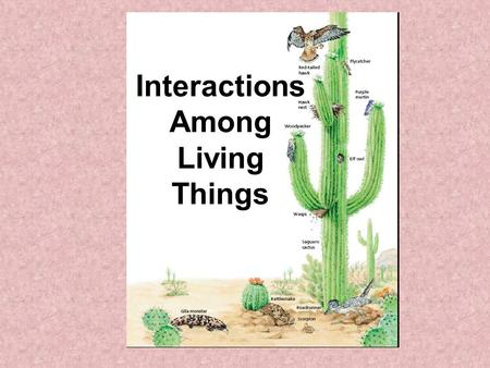 Interactions Among Living Things. Interactions of Living Things What are adaptations? Why are adaptations important? Describe Predation. What is symbiosis?