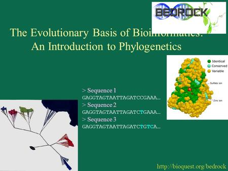 The Evolutionary Basis of Bioinformatics: An Introduction to Phylogenetics  > Sequence 1 GAGGTAGTAATTAGATCCGAAA… > Sequence.