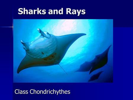 Sharks and Rays Class Chondrichythes.