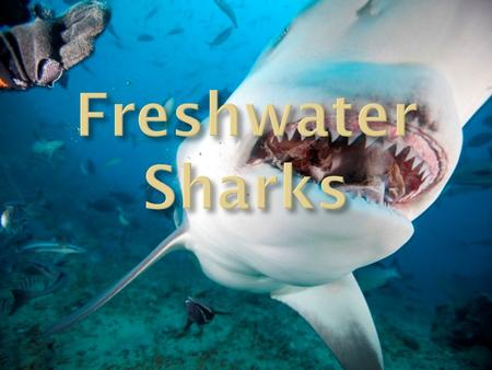  There exists freshwater sharks which are capable of surviving in fresh water lakes and rivers. These sharks are; 1. The Bull Shark ( Carcharhinus.