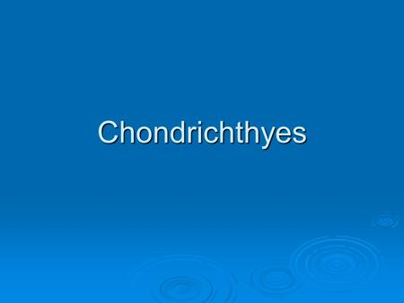 Chondrichthyes. Hydrodynamics  Body shape  Sharks typically have an elongate fusiform body (rounded and tapering at both ends). This body shape reduces.