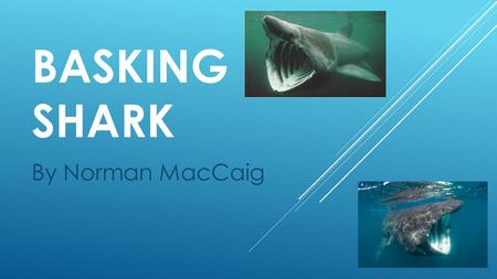 BASKING SHARK By Norman MacCaig. LEARNING INTENTIONS  I can develop my knowledge of MacCaig poetry  I can explore the use of poetic devices.