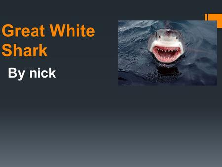 Great White Shark By nick.  My name is Nick and my animal is a Great White shark.
