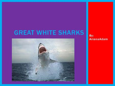 Great White Sharks By: ArianaAdam.