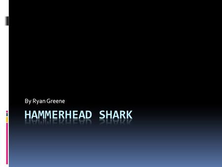By Ryan Greene Hammerhead shark.