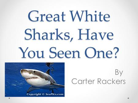 Great White Sharks, Have You Seen One? By Carter Rackers.