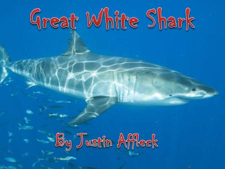 Animal Species The great white shark, Carcharodon carcharias, also known as great white, white pointer, white shark, or white death, is an exceptionally.