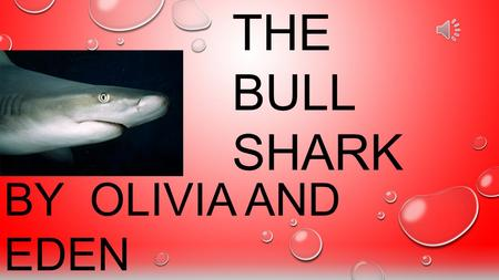 BY OLIVIA AND EDEN THE BULL SHARK The Bull Shark's belly is off white. It weighs about 200 pounds. Its about 7 feet long. Bull Shark teeth are triangular,