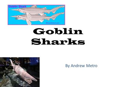 Goblin Sharks By Andrew Metro. DESCRIPTION The Goblin Shark is a rarely-seen, slow swimming shark. This shark's snout is long, flat, and very pointy.