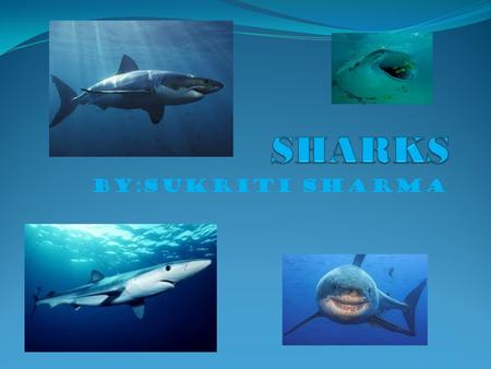 SHARKS BY:SUKRITI SHARMA.