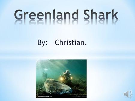 By: Christian. Habitat  Greenland sharks like it very cold.  They live in North Atlantic waters around Greenland, Canada and Iceland.  They are very.