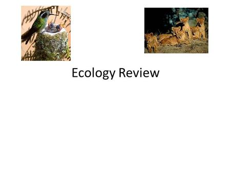 Ecology Review. Habitat Residence (Where they live) Ex. Bird -Nest in tree.
