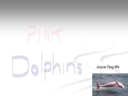 Joyce Ting 8N. What are Pink dolphins Pink dolphins are a rare type of animal, you can hardly find it in a lot of places. This type of sea animal is a.