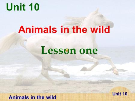 Unit 10 Animals in the wild Lesson one.