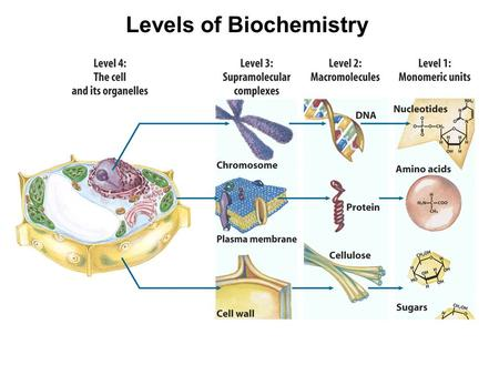 Levels of Biochemistry. R-S-RThioether.