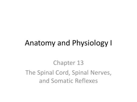 Anatomy and Physiology I Chapter 13 The Spinal Cord, Spinal Nerves, and Somatic Reflexes.