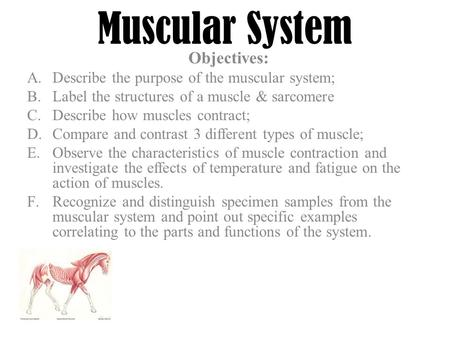 animal anatomy & physiology a.describe the role of the muscular, Muscles