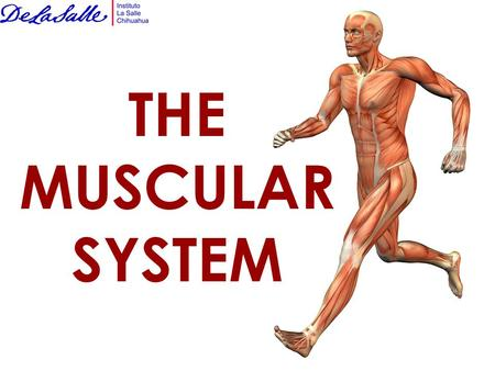 THE MUSCULAR SYSTEM. Muscles that move your body are attached to your skeleton. Because of your muscles, you can walk, run, smile, breathe, or swallow.