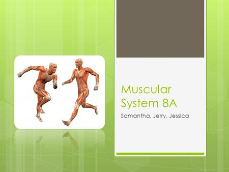 Muscular System 8A Samantha, Jerry, Jessica. Table of Contents 1. The role of muscular system-- Pg3 2. The major organs in muscular system-- Pg4 3. How.