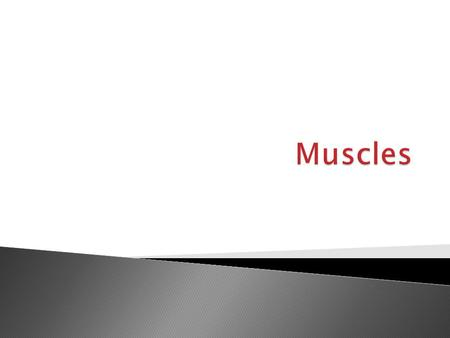  More than 600 muscles in our bodies (about 650)  Muscles make up approximately half of the human body's weight  The human heart will beat about 40.
