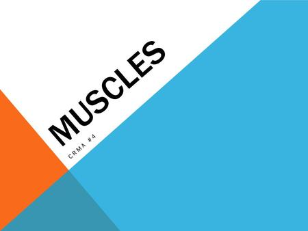 MUSCLES CRMA #4. What Are the Muscles and What Do They Do? Bones don't work alone they need help from the muscles and joints. Muscles pull on the joints,