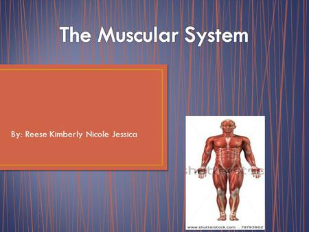 By: Reese Kimberly Nicole Jessica One big function of the Muscular System is movement. Skeletal muscles are arranged in pairs on opposite sides of joints.