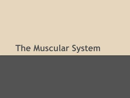 The Muscular System. Basics Facts BASIC FUNCTIONS -Controls Movement -Voluntary vs Involuntary -Support -Stores Minerals -Tissues: bones, ligaments, cartilage,