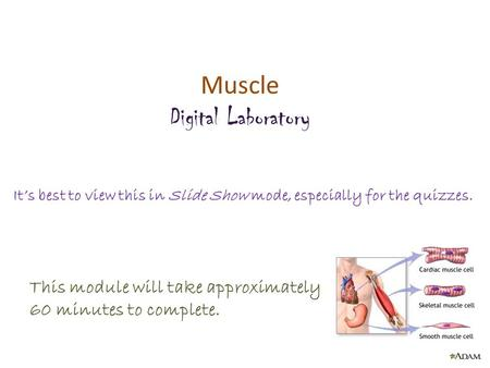 Muscle Digital Laboratory It's best to view this in Slide Show mode, especially for the quizzes. This module will take approximately 60 minutes to complete.