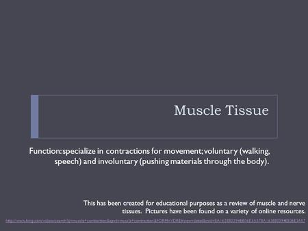 Muscle Tissue Function: specialize in contractions for movement; voluntary (walking, speech) and involuntary (pushing materials through the body).