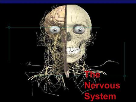 AP Biology 2003-2004 The Nervous System. Regents Biology 2003-2004 Overview ▪ The Nervous System controls and coordinates all the functions of the body.
